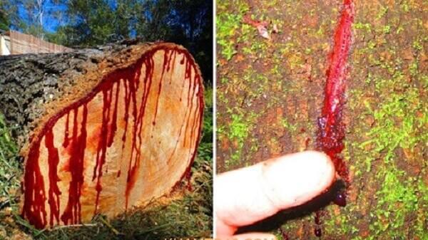 bán gỗ hương huyết bình dương