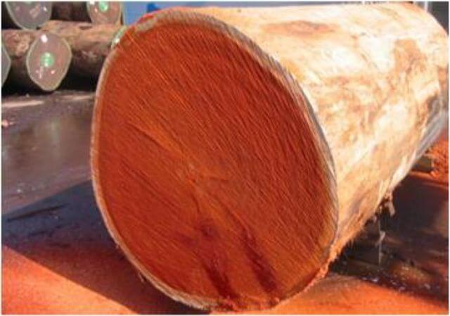 gỗ hương nam phi chất lượng uy tín