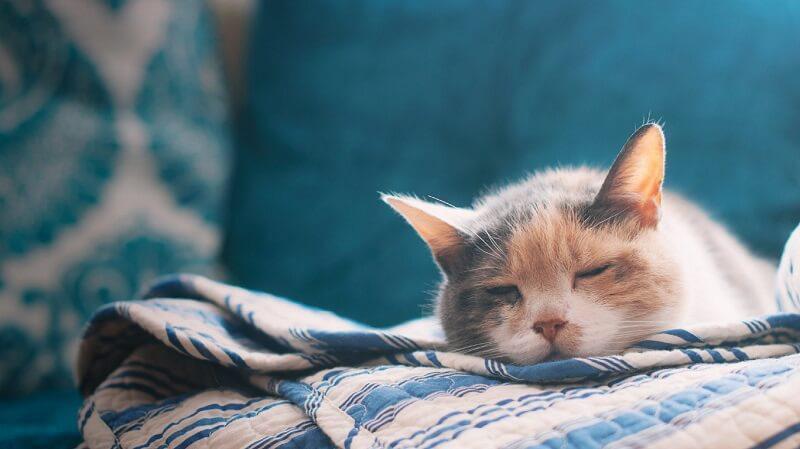 mèo thể hiện tâm trạng lo lắng