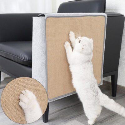 mèo vận động cơ bắp