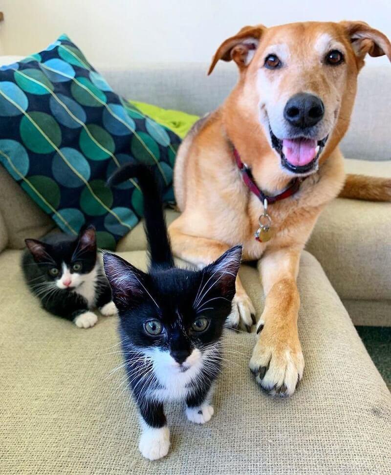 nguyên nhân mèo cào sofa